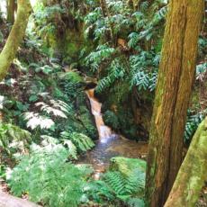 Der gruene Urwald